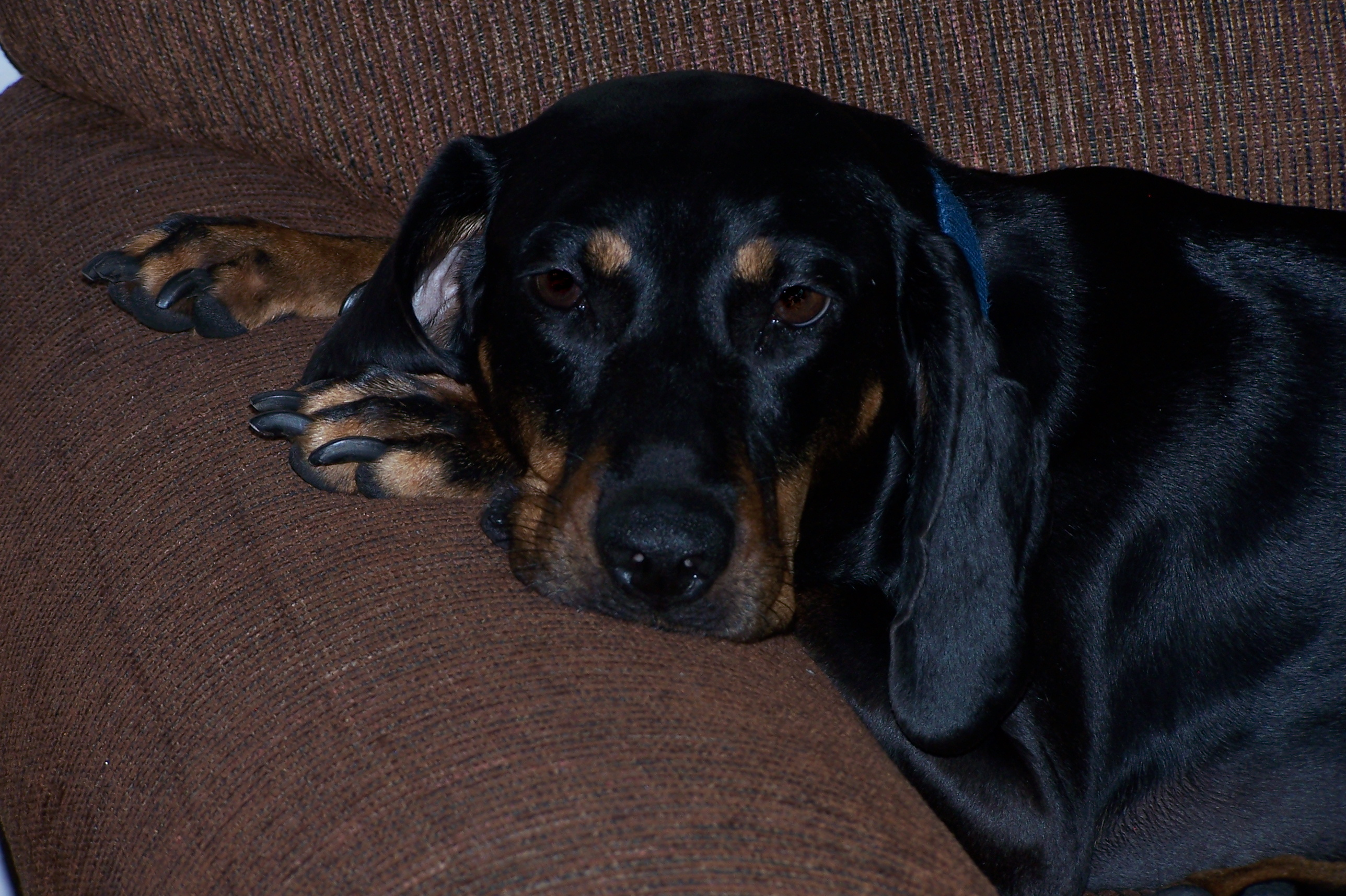 Abigail resting on the couch